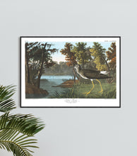 Load image into Gallery viewer, Yellow Shank Print by John Audubon