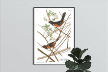 Load image into Gallery viewer, Towee Bunting Print by John Audubon