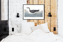 Load image into Gallery viewer, Manks Shearwater Print by John Audubon