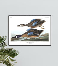 Load image into Gallery viewer, Blue-Winged Teal Print by John Audubon