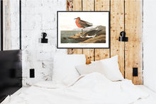 Load image into Gallery viewer, Red-Breasted Sandpiper Print by John Audubon