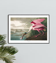 Load image into Gallery viewer, Roseate Spoonbill Print by John Audubon
