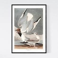 Load image into Gallery viewer, Bonapartian Gull Print by John Audubon