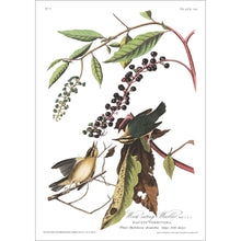 Load image into Gallery viewer, Worm-Eating Warbler Print by John Audubon