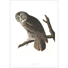 Load image into Gallery viewer, Great Cinereous Owl Print by John Audubon