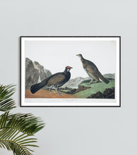 Load image into Gallery viewer, Long-Tailed or Dusky Grous Print by John Audubon