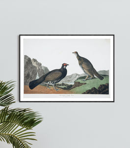 Long-Tailed or Dusky Grous Print by John Audubon