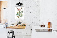 Load image into Gallery viewer, Ruff-Necked Humming Bird Print by John Audubon
