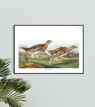 Load image into Gallery viewer, Sharp-Tailed Grous Print by John Audubon