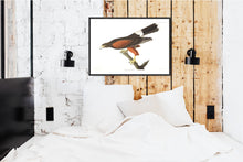 Load image into Gallery viewer, Louisiana Hawk Print by John Audubon
