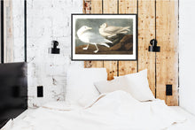 Load image into Gallery viewer, Burgomaster Gull Print by John Audubon
