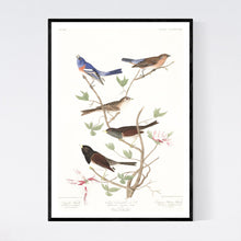 Load image into Gallery viewer, Lazuli Finch Clay-Coloured Finch and Oregon Snow Finch Print by John Audubon