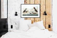 Load image into Gallery viewer, Black-Throated Guillemot Nobbed-Billed Auk Curled-Crested Auk and Horned-Billed Guillemot Print by John Audubon