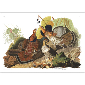 Ruffed Grous Print by John Audubon