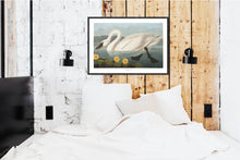 Load image into Gallery viewer, Common American Swan Print by John Audubon