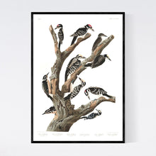 Load image into Gallery viewer, Maria's Woodpecker Three-Toed Woodpecker Phillips Woodpecker Canadian Woodpecker Harris's Woodpecker and Audubon's Woodpecker Print by John Audubon