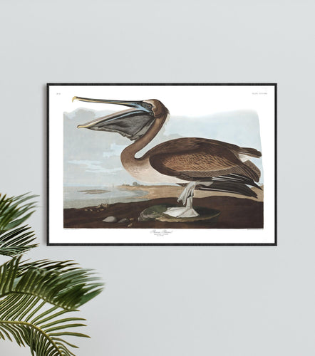 Brown Pelican Print by John Audubon