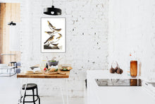 Load image into Gallery viewer, Bullock's Oriole Baltimore Oriole Mexican Goldfinch Varied Thrush and Common Water Thrush Print by John Audubon