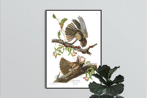 Chuck-Will's Widow Print by John Audubon