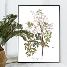 Load image into Gallery viewer, White-Eyed Flycatcher or Vireo Print by John Audubon