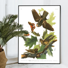 Load image into Gallery viewer, Whip-Poor-Will Print by John Audubon