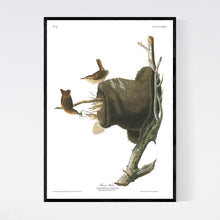 Load image into Gallery viewer, House Wren Print by John Audubon