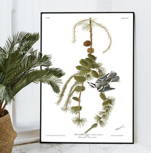Load image into Gallery viewer, Black and White Creeper Print by John Audubon