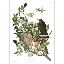 Load image into Gallery viewer, Broad-Winged Hawk Print by John Audubon