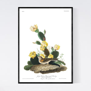 Grass Finch Bay-Winged Bunting Print by John Audubon