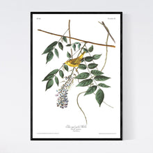 Load image into Gallery viewer, Blue-Eyed Yellow Warbler Print by John Audubon