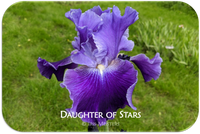 Daughter of Stars
