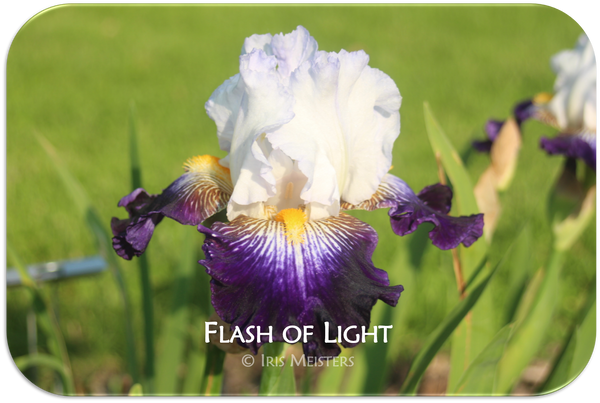 Flash of Light