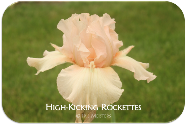 High-Kicking Rockettes