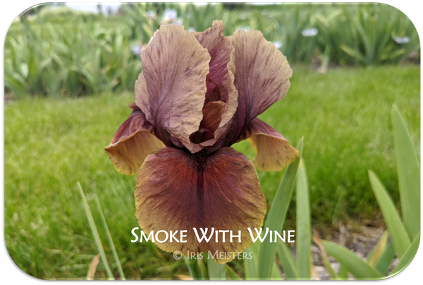 Smoke With Wine