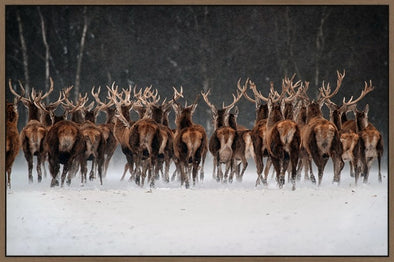 Stags Aside - Canvas Art