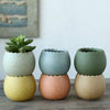 Classic Ceramic Succulent Plant Flower Pots (Set Of 6)