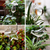 Houseplant Automatic Self Watering Glass