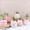 Mini Pink Succulent Ceramic Pots (Set Of 6)