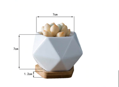 Modern Geometic Pentagon White Ceramic Planter For Succulents