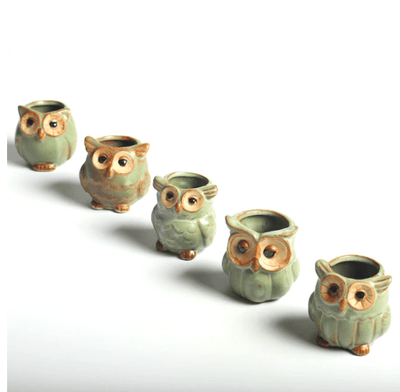 Owl Shape Plant Flower Pots ( Set of 5 )