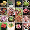 Set Of 3 Best Seller Colorful Succulents - Monthly Mystery Box