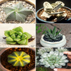 Collector Succulents Set Of 6
