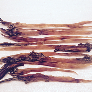 Australian- Veal Tendons.(each).