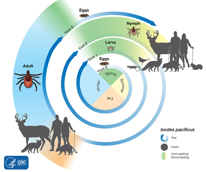Q&A about ticks: Ticks, the imperishable parasites