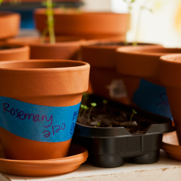 Starting Seedings Indoors to Kick Start Your Garden