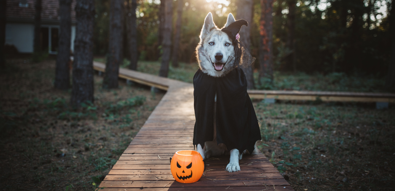 Halloween Pet Dangers