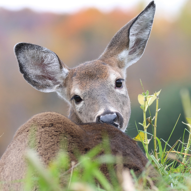 Protecting Your Landscape from Deer