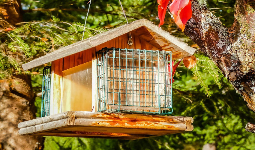Bird Feeding Tips for Fall