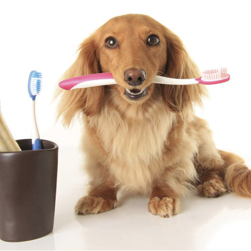 Healthy Dental Practices for Pets