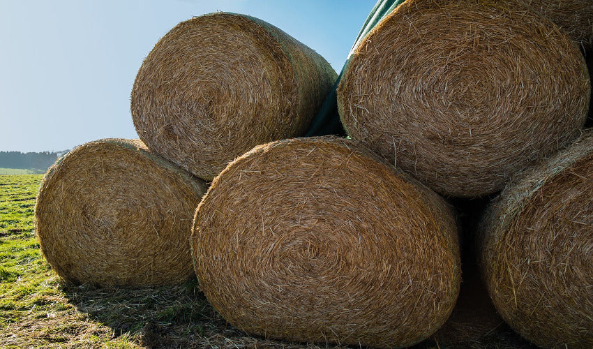 The Importance of Extra Hay During Winter Months